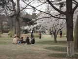 公园中的大学生.jpg